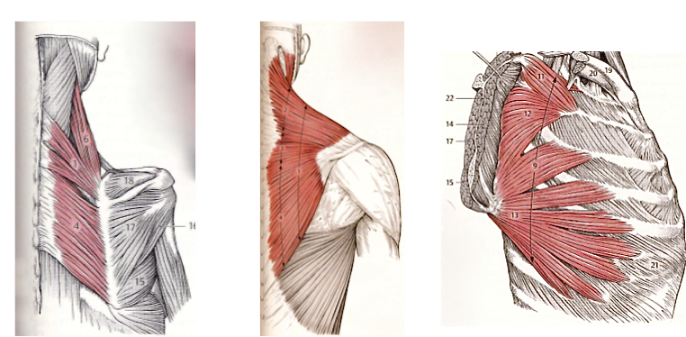 Shoulder impingement - marcaurel
